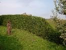 Údržba, stříhání a tvarování živých plotů a keřů