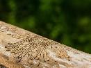 Dřevokazný hmyz chodbičky