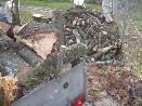 Řezání a odvoz dřeva