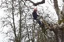 Dobročinná arboristická akce v Hůrkách