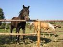 Koníci Romana Sedláka