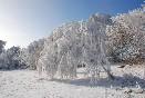 Zima ve Studené