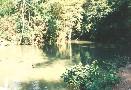 Místní rybníček